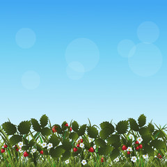 lawn with flowers strawberries and herbs