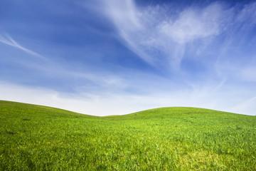 Grass Field./ Northern Poland