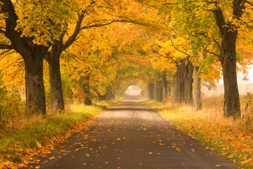 Northern Poland./ Autumn road.