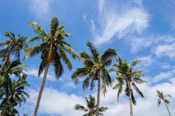 Palm tree crowns against blue sky