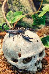 skull and scorpion