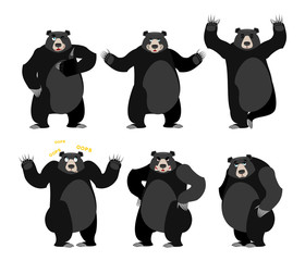 Baribal American black bear set. Grizzly various poses. Expressi