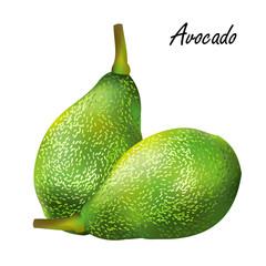 Avocado. Hand drawn vector illustration of avocado fruits on white background.
