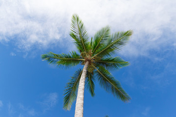 Coconut tree farm in Bahia