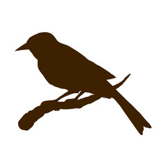 Bird. Vector drawing