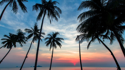 Palm trees silhouettes on the background of the blue sky during the beautiful marine sunset.
