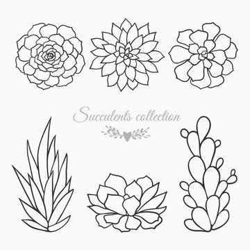 succulents vector sketch
