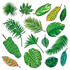 Tropical Leaves Collection on isolate vector. Different Beautiful palm leaf. Beautiful big Set. Vector illustration. Eps 10.