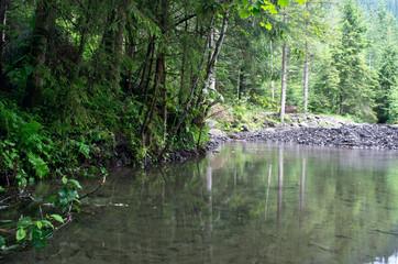 Mount lake in summer. Karpathien mount.