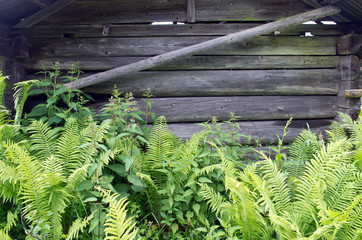 Wooden wall with close-growing ferns