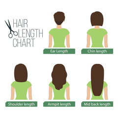 Hair length chart back view, 5 different hair lengths. Vector.
