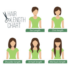 Hair length chart front view,5 different hair lengths. Vector.