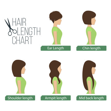 Hair length chart side view, 5 different hair lengths. Vector.