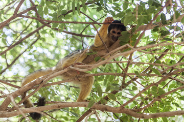 Monkey An Tree