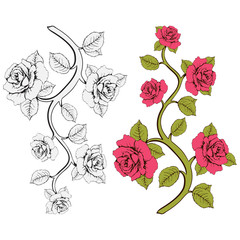 Flower branch roses. Set of pink and white roses branches. Floral print. Ornament with roses. Floral frame, flower card, border of flowers, banner, decoration. Vector floral background