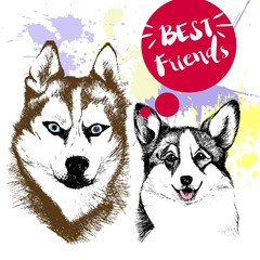 Vector hand drawn concept of siberian huskyr and welsh corgi frienship. Decorated with red blots. Best friends.