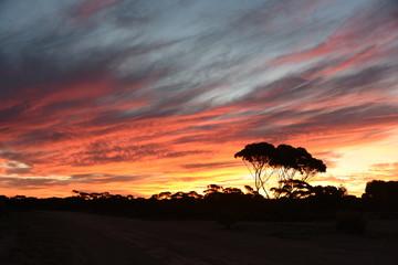 sunset in the Australian desert