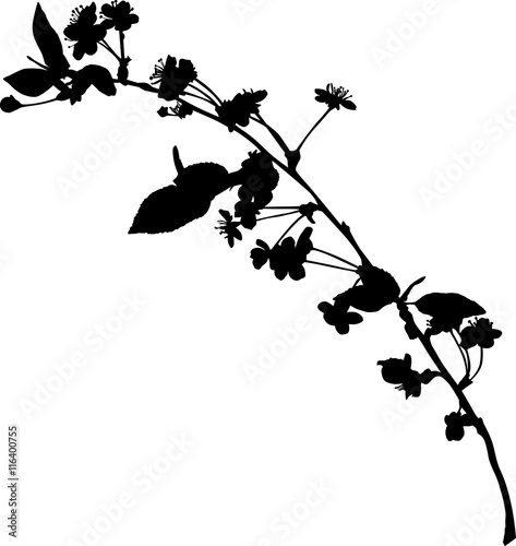 quotspring black small branch of cherry tree silhouette