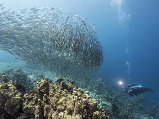 Unterwasser - Riff - Fisch - Fischschwarm - Fotograf - Tauchen - Curacao - Karibik