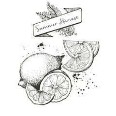 Vector set of summer harvest. Decorated with banner, fern leaves and blots. Lemon, lime and orange slices.