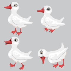 Cartoon white duck in four poses, vector animals