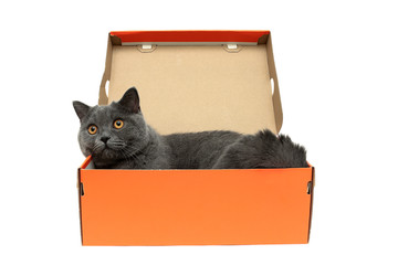 cat with yellow eyes lying in an open cardboard box on a white b