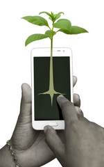 Human hand drawing a plant in smart phone and it's growth pops out of the phone as a real plant.