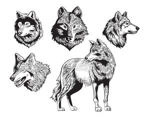 sketch drawing wolf silhouette set on white background