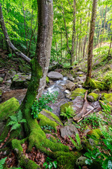 Curved tree among forest stream boulders