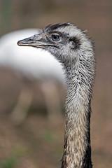 Ostrich look 2