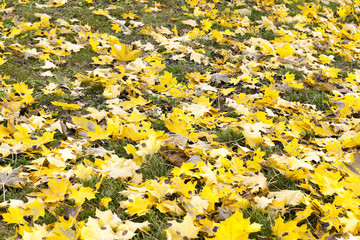 foliage on grass, autumn