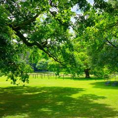 Beautiful meadow in park