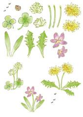 公園の草花と昆虫