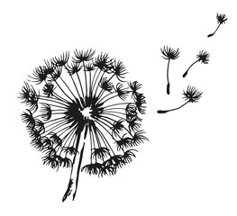 Dandelion blowing hand drawn vector illustration
