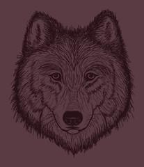 Wolf Head sketch illustration