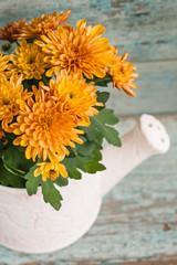 Orange chrysanthemums in ceramic garden watering