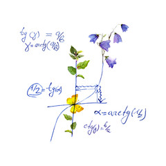 Math design - mathematical graph, flowers. Hand written school concept