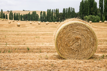 Large round hay bales in paddock.