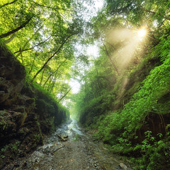 Green forest with path and sun