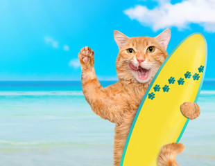 Beautiful surfer cat on the beach .