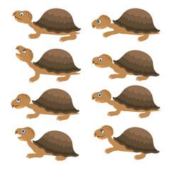 Turtles set. Vector cartoon collection.