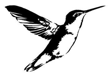 black and white linear paint draw hummingbird illustration