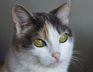Portrait of catling with intelligent green eyes. Close-up.