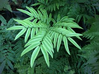 New Fern Leaf Close-up