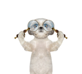 Cute dog looking through two magnifying glass magnifier