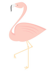 cute flamingo isolated on white background vector illustration