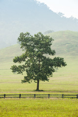 Green tree and wooden fence in the meadow with mountain view behind.