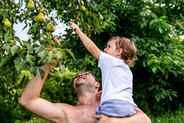 the child picks a pear tree