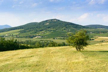 Poster Hill Green hills near Sarospatak in Hungary Tokaj region