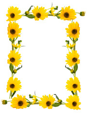 Isolated frame of yellow flowers